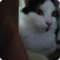 Adopt A Pet :: URGENT - Hugz - wayne, MI