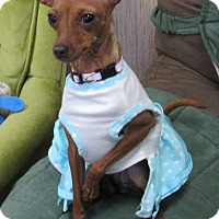 Adopt A Pet :: Charlotte - Sonoma, CA