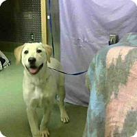 Adopt A Pet :: URGENT 1/25 @ DEVORE - San Bernardino, CA