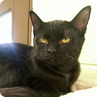 Adopt A Pet :: Rose - Shinnston, WV
