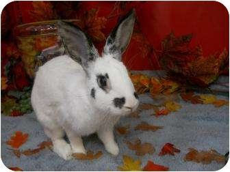 Other/Unknown Mix for adoption in Roseville, California - Tulip