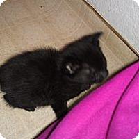 Adopt A Pet :: Priscilla - Modesto, CA