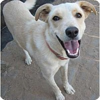 Adopt A Pet :: Buddy - Golden Valley, AZ