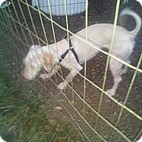 Adopt A Pet :: Dexter - Puyallup, WA