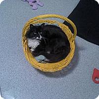 Adopt A Pet :: Dreyfest - Sherman Oaks, CA