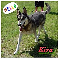 Adopt A Pet :: Kira - Williston, FL