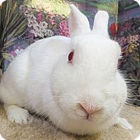 Adopt A Pet :: Gems - Foster, RI