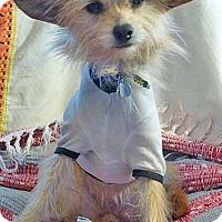 Adopt A Pet :: Lotus - Los Angeles, CA