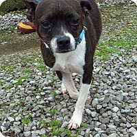Adopt A Pet :: Tara - Franklin, KY