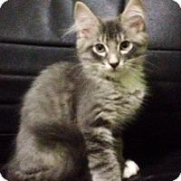 Adopt A Pet :: Noah - Monroe, GA