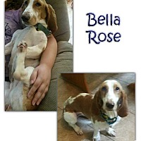 Adopt A Pet :: Bella Rose - Marietta, GA