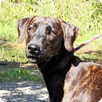 Adopt A Pet :: Kate - Richmond, VA