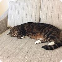 Adopt A Pet :: Oscar - Ortonville, MI
