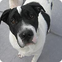 Adopt A Pet :: Jonah - Phoenix, AZ