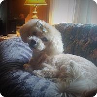 Adopt A Pet :: Chiquita-adoption pending - Mississauga, ON