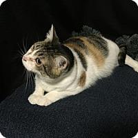 Adopt A Pet :: Susan - Fayetteville, GA