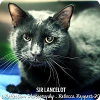 Adopt A Pet :: Sir Lancelot - Appleton, WI