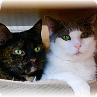 Adopt A Pet :: Lulu - Commack, NY
