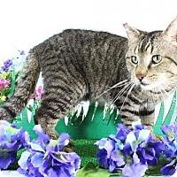 Adopt A Pet :: Jefferson - Harrisonburg, VA