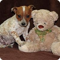 Adopt A Pet :: Hemlock - Salem, NH