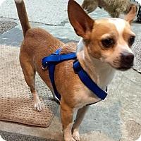 Adopt A Pet :: Bruce - Groveland, FL
