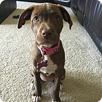 Adopt A Pet :: Lily - Oviedo, FL