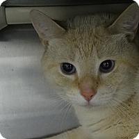 Adopt A Pet :: Sherman - Elyria, OH
