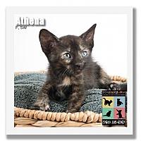 Adopt A Pet :: Athena - Palm Desert, CA