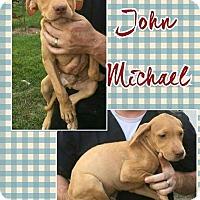 Adopt A Pet :: John meet me 9/9 - Manchester, CT