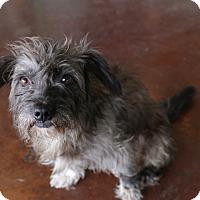 Adopt A Pet :: Henley - San Antonio, TX
