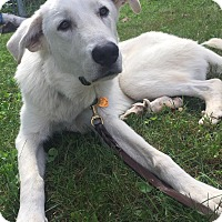 Adopt A Pet :: Merlin - Adopted! - Ascutney, VT