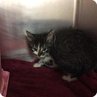 Adopt A Pet :: Venus - Janesville, WI