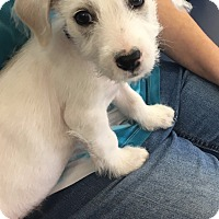 Adopt A Pet :: Einstein in San Antonio - San Antonio, TX