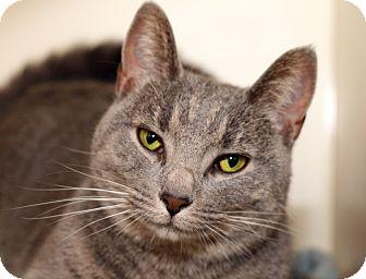 Where To Adopt Cats Royal Oak Mi