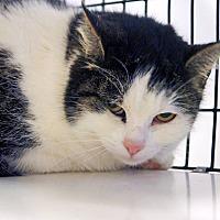 Adopt A Pet :: Tessa - Victor, NY