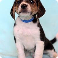 Adopt A Pet :: Neil - Waldorf, MD