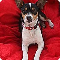 Adopt A Pet :: Ace - san diego, CA