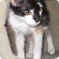 Adopt A Pet :: Fancy - Dallas, TX