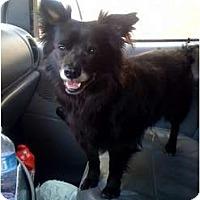 Adopt A Pet :: Baby - Fowler, CA