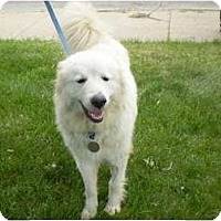 Adopt A Pet :: Sisco - Minneapolis, MN