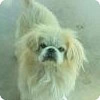 Adopt A Pet :: Boone - Vansant, VA