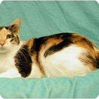 Adopt A Pet :: Sophia - Sacramento, CA
