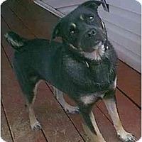 Adopt A Pet :: Shasta - dewey, AZ