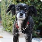 Adopt A Pet :: Molly Polly