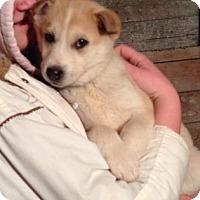 Adopt A Pet :: Neptune - Saskatoon, SK