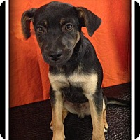 Adopt A Pet :: Doughnut - Indian Trail, NC