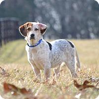 Adopt A Pet :: Harvey - Knoxville, TN