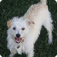 Adopt A Pet :: WESLEY - Mission Viejo, CA