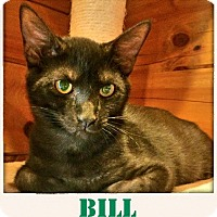 Adopt A Pet :: Bill Smoke - McDonough, GA
