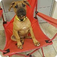 Adopt A Pet :: Frolick *PENDING* - Lima, OH
